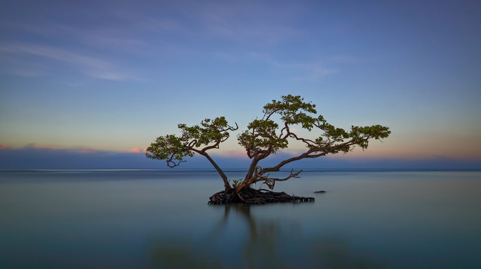 water, clouds, island, trees, reflection, horizon, Puerto Rico, long exposure, roots, nature, landscape, branch, sunset, leaves
