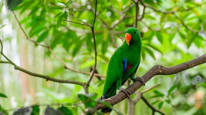 twigs, animals, birds, depth of field, parrot