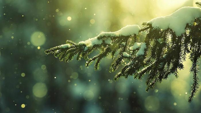 snow flakes, snow, winter, depth of field, trees