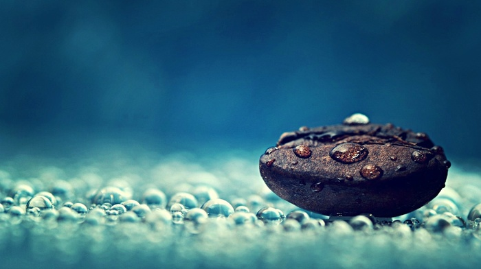 macro, artwork, blue background, coffee beans, photography, closeup, water drops, depth of field