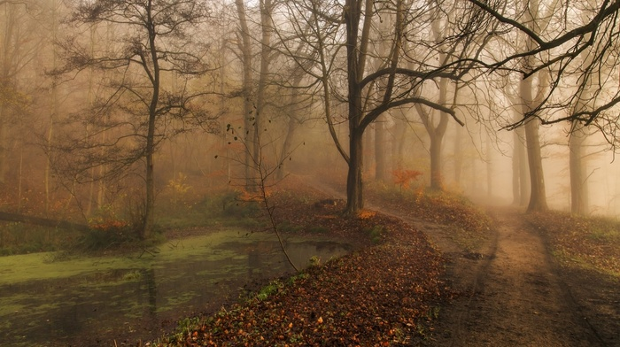 nature, trees, landscape, leaves, fall, path, park, pond, mist, water, morning