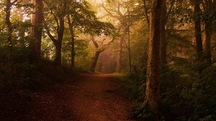 landscape, trees, mist, shrubs, forest, sunlight, leaves, morning, path, nature, fairy tale