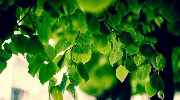 branch, blurred, sunlight, macro, foliage, nature, bokeh, green, trees