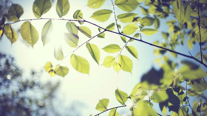 leaves, foliage, branch, macro, blurred, trees, nature, sunlight, bokeh
