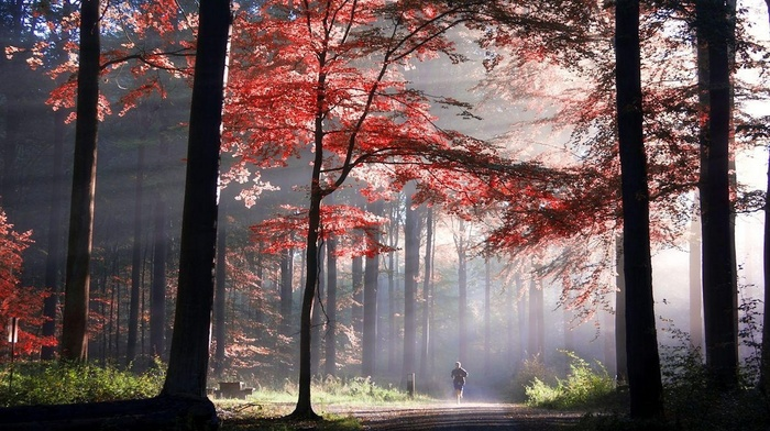landscape, sunlight, sun rays, trees, morning, colorful, nature, path, running, fall, park, leaves, mist