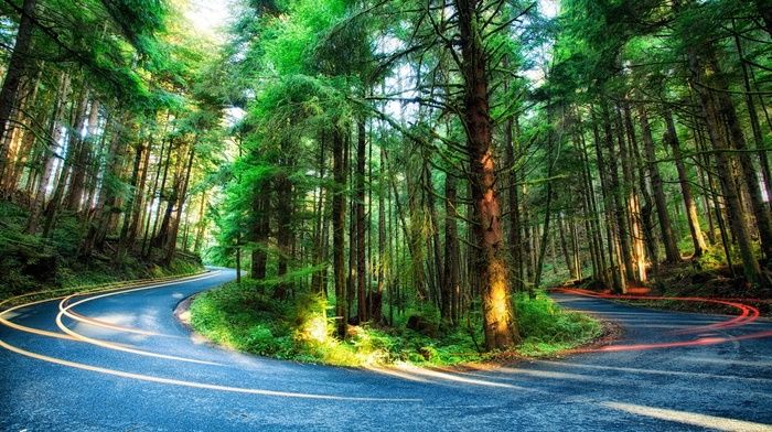 plants, light trails, moss, Oregon, colorful, USA, nature, sunlight, road, forest, HDR, branch, long exposure, trees, pine trees