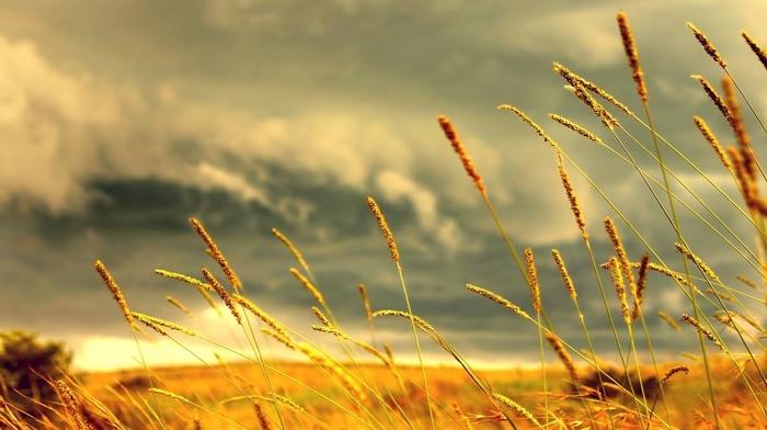 nature, grass, macro, clouds, field, spikelets, depth of field