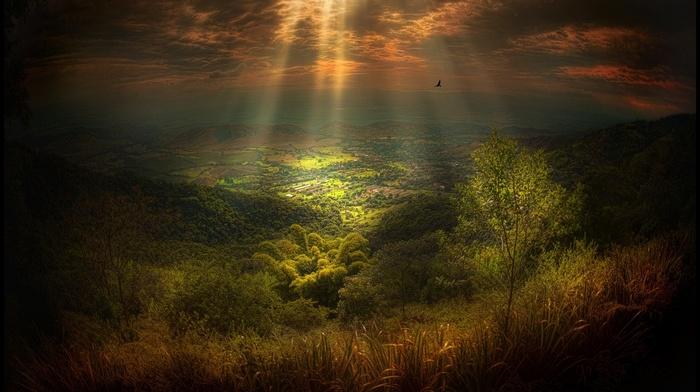 trees, nature, sun rays, shrubs, sky, grass, field, clouds, fly, landscape, hill, sunlight, village, birds