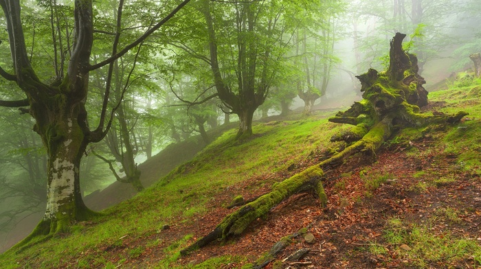 moss, hill, mist, nature, leaves, branch, grass, forest, trees, dead trees
