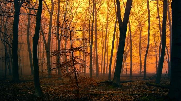 mist, trees, moss, forest, orange, leaves, sunlight, fall, silhouette, nature, branch, landscape
