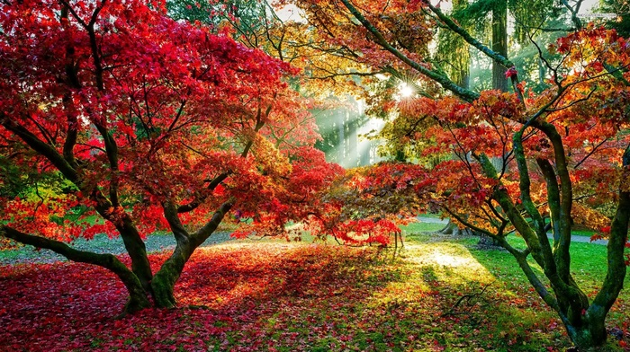 forest, trees, sun rays, fall, red leaves, leaves, path