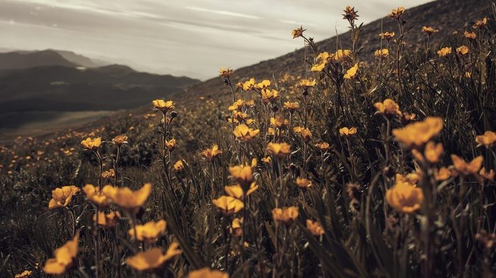 wildflowers, field, nature, summer, plants, overcast, macro, Adobe Photoshop, yellow flowers, flowers, wilderness, depth of field, landscape