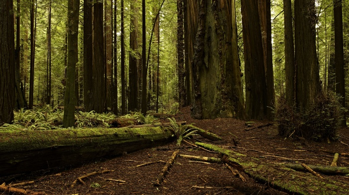 plants, nature, moss, ferns, green, trees, branch, wood, leaves, forest, log, dead trees, landscape