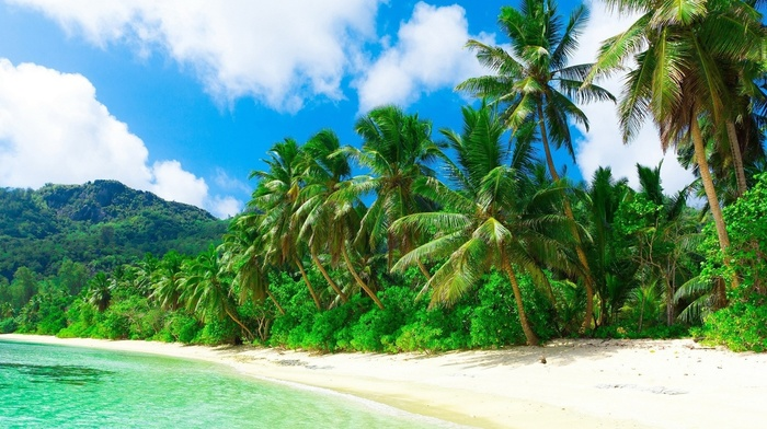 sea, nature, landscape, sand, hill, holiday, palm trees, beach, tropical, clouds