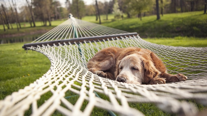 nature, dog, rest, nets, depth of field, lake, sleeping, animals, park, trees, pet, grass