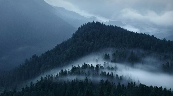 forest, landscape, nature, mist, clouds, mountain, Alps