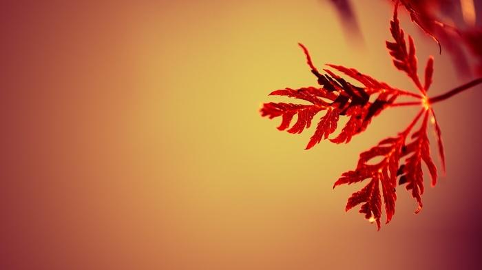 depth of field, nature, gradient, leaves, macro, simple background, red, simple