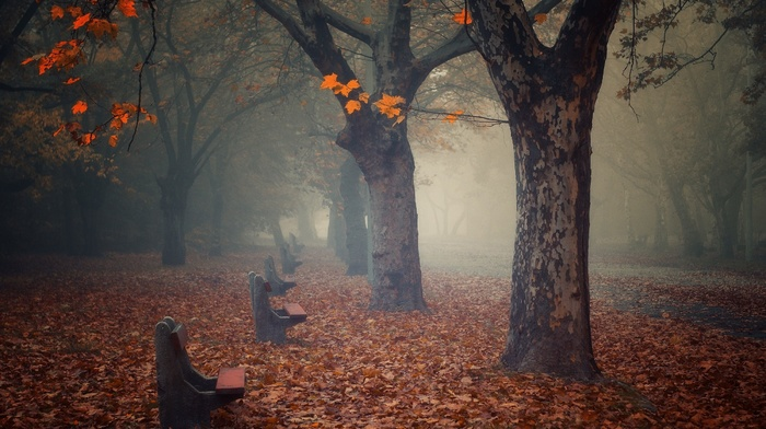 fall, atmosphere, leaves, calm, bench, path, landscape, empty, trees, nature, park, morning, mist