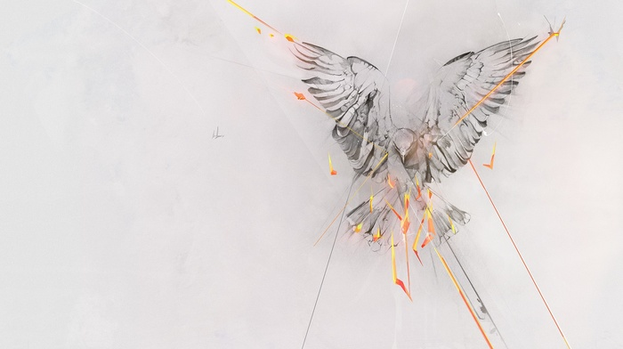 birds, phoenix