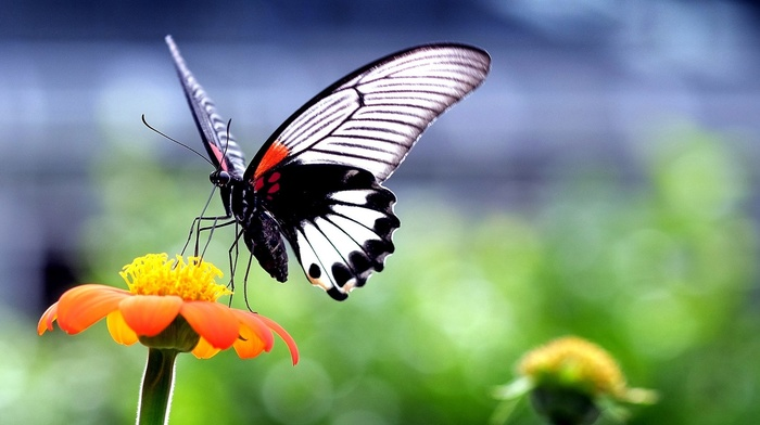 flowers, wings, macro, animals, closeup, nature, insect, butterfly