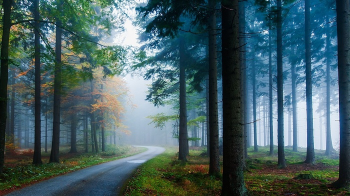 road, forest, nature, trees, grass, landscape, pine trees, mist, sunlight, morning, fall