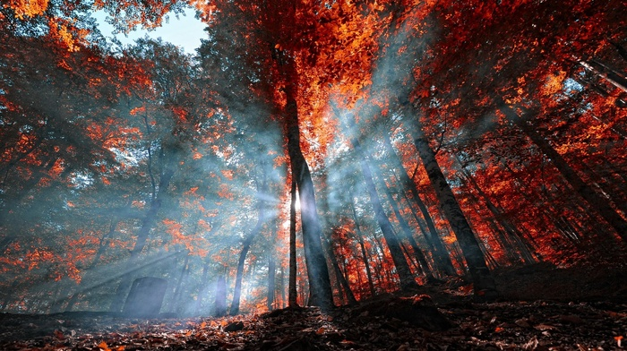 landscape, trees, red, Turkey, forest, mist, fall, nature, leaves, sun rays, blue