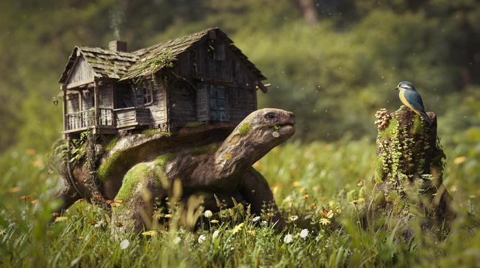 photography, old, field, house, animals, butterfly, moss, tree stump, nature, brown, photoshopped, artwork, log, turtle, green, flowers, birds, grass, depth of field, digital art, trees