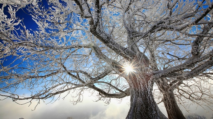 trees, nature, winter, frost, landscape, cold, snow, white, Sun, clouds, France