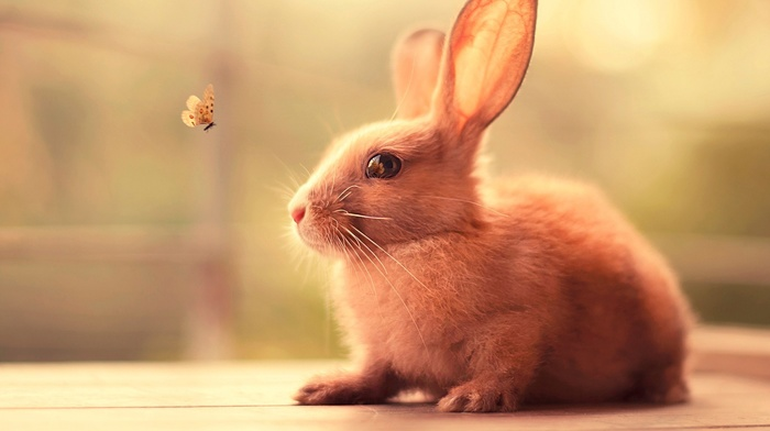butterfly, insect, animals, nature, rabbits