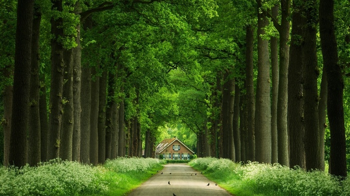 plants, leaves, birds, forest, house, grass, wood, nature, branch, trees, road