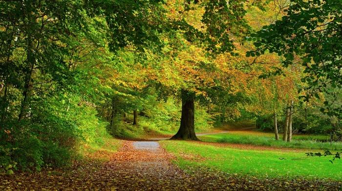 park, shrubs, grass, landscape, path, fall, leaves, trees, nature