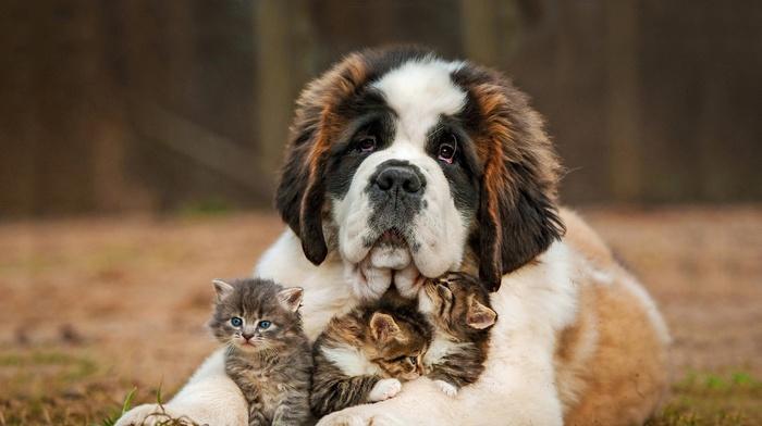 grass, animals, dog, baby animals, kittens, depth of field, cat, nature