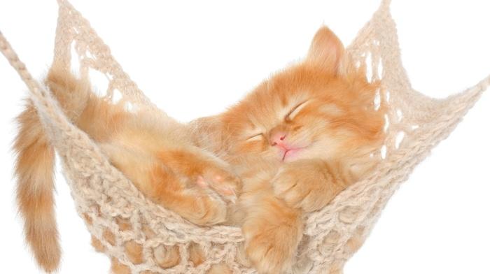 white background, nature, baby animals, hammocks, animals, cat, feline, kittens