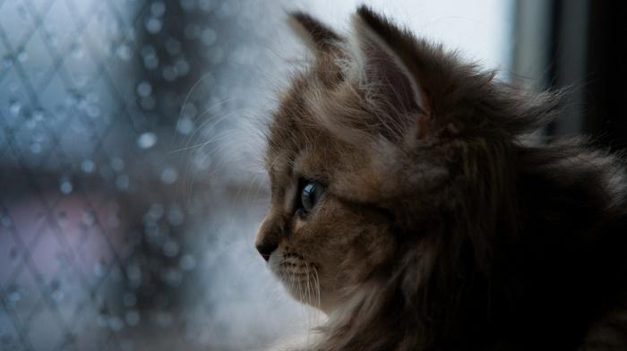 profile, closeup, baby animals, cat, face, animals, window, nature, kittens, ben torode