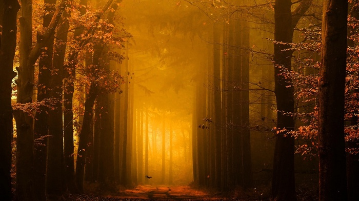 forest, fairy tale, path, sunrise, sunlight, fall, landscape, leaves, gold, trees, mist, nature