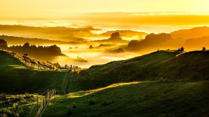 sunlight, New Zealand, grass, hill, nature, mist, clouds, field, forest, trees, fence, landscape