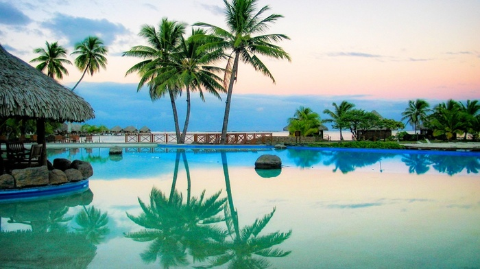 summer, palm trees, water, landscape, resort, swimming pool, nature, reflection, sunrise