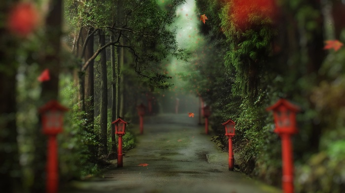 path, leaves, trees, forest, nature, red leaves