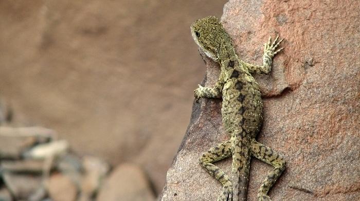 nature, reptile, animals