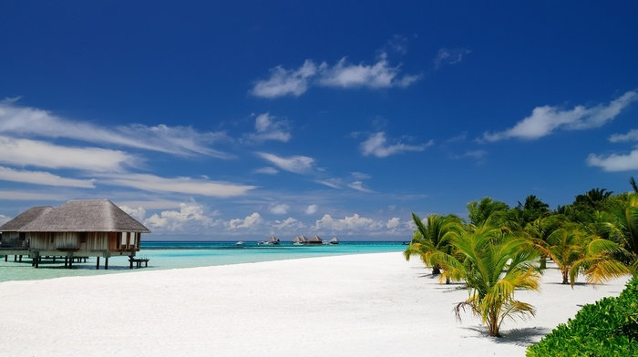 resort, landscape, tropical, sea, architecture, palm trees, beach, island, Maldives, sand, bungalow, nature, summer