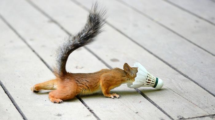 animals, nature, squirrel