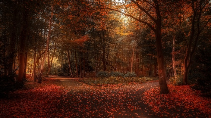 fall, sunlight, park, landscape, shrubs, path, trees, atmosphere, leaves, nature