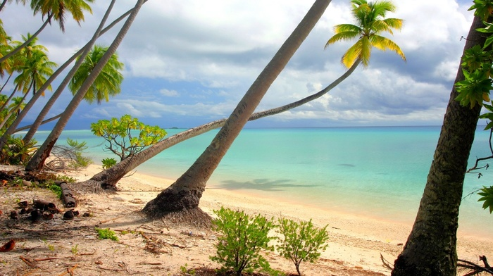 palm trees, nature, landscape, sand, French Polynesia, clouds, turquoise, water, island, summer, sea, beach, tropical, shrubs, white
