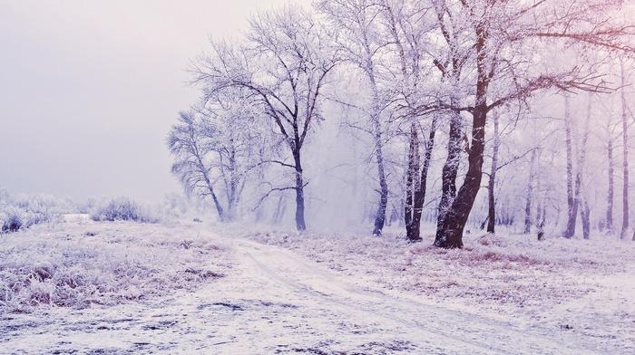 winter, mist, path, snow, nature, white, landscape, trees