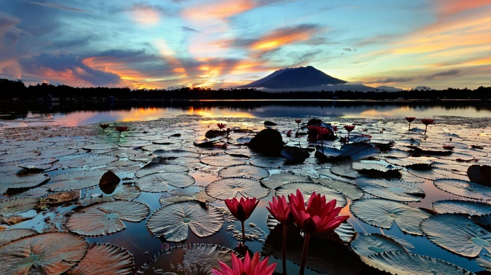 leaves, lotus flowers, nature, trees, Philippines, water, mist, flowers, lily pads, landscape, house, lake, sunset, reflection, hill, clouds, forest, silhouette