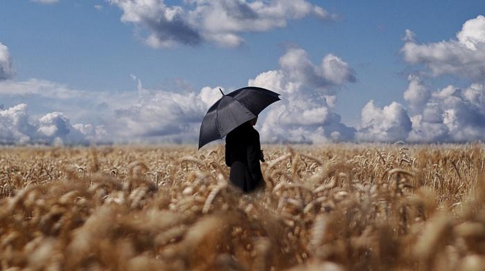 wheat, clouds, field, umbrella, sky