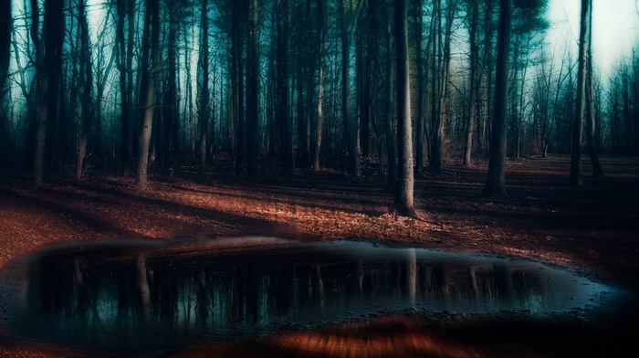 trees, puddle, frost, morning, shadow, mist, blue, pine trees, nature, landscape, dark, forest