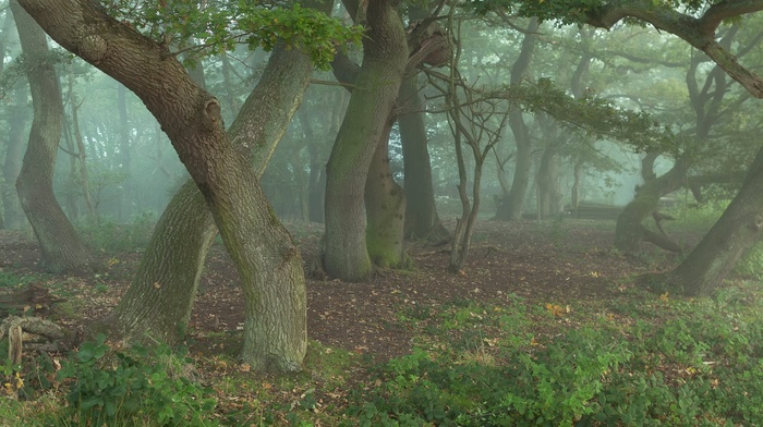 trees, plants, nature, mist, wood, forest, leaves, grass, branch