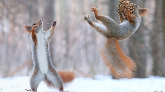 force, nature, winter, snow, animals, squirrel