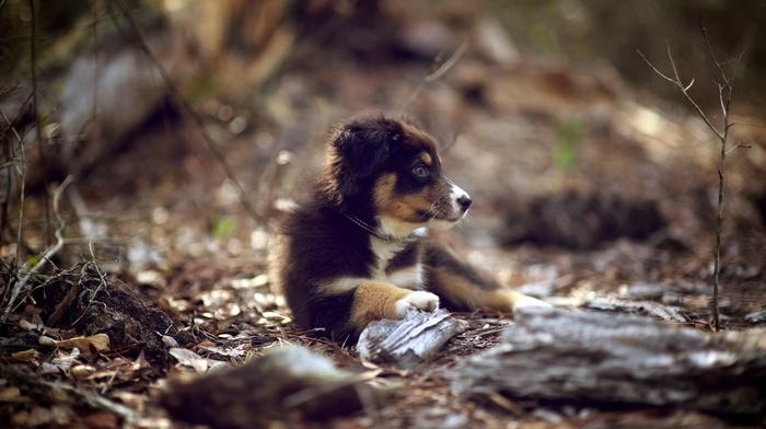 baby animals, dog, depth of field, puppies, animals